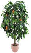 Europalms Mangobaum mit Früchten 165 cm